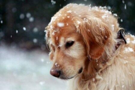 外表可爱的十大危险动物 外表温驯实则暴躁都是有潜在的危险性的