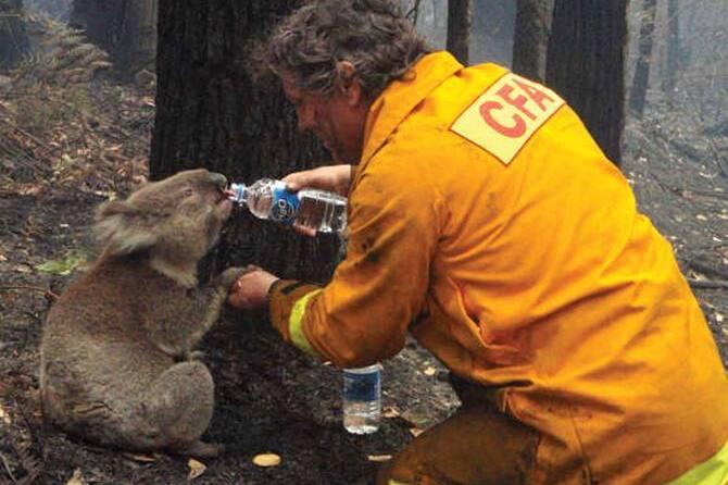 大火烧了4个月!为节约水源,澳大利亚政府饮鸩止渴:下令屠杀骆驼!