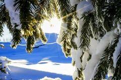 镜头|大雪已至仲冬始