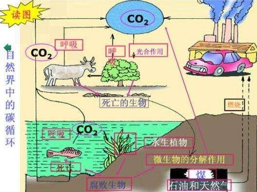 科学家说煤和石油是几亿年前植物动物尸体演变成的,真的吗?