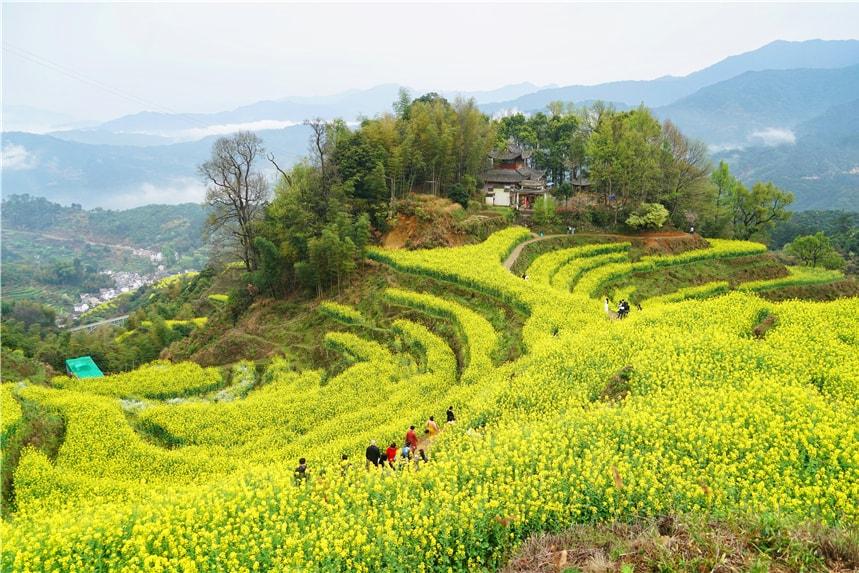 最受游客喜爱的婺源篁岭,春天一到,梯田油菜花漫山遍野盛放