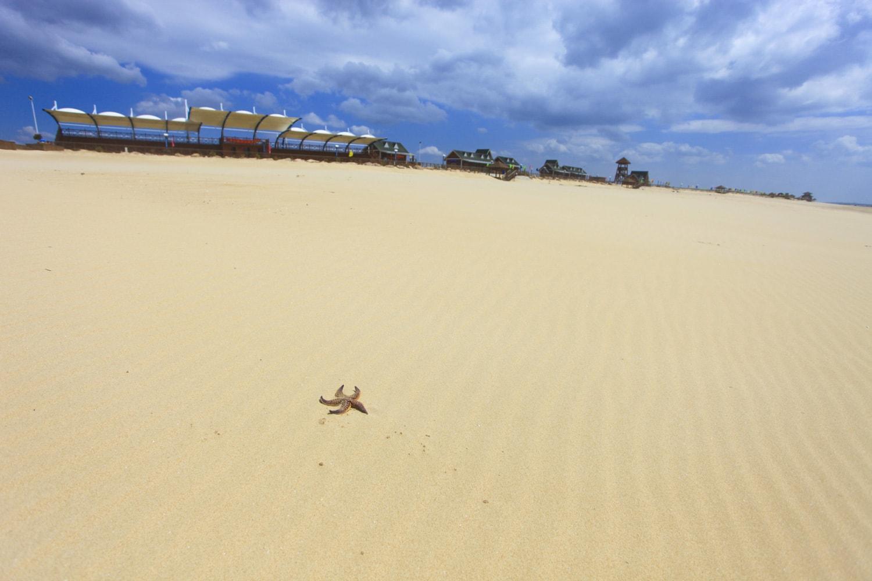 山东半岛最后一片黄金海岸,金沙银滩,海鸥翩舞,真正的世外桃源