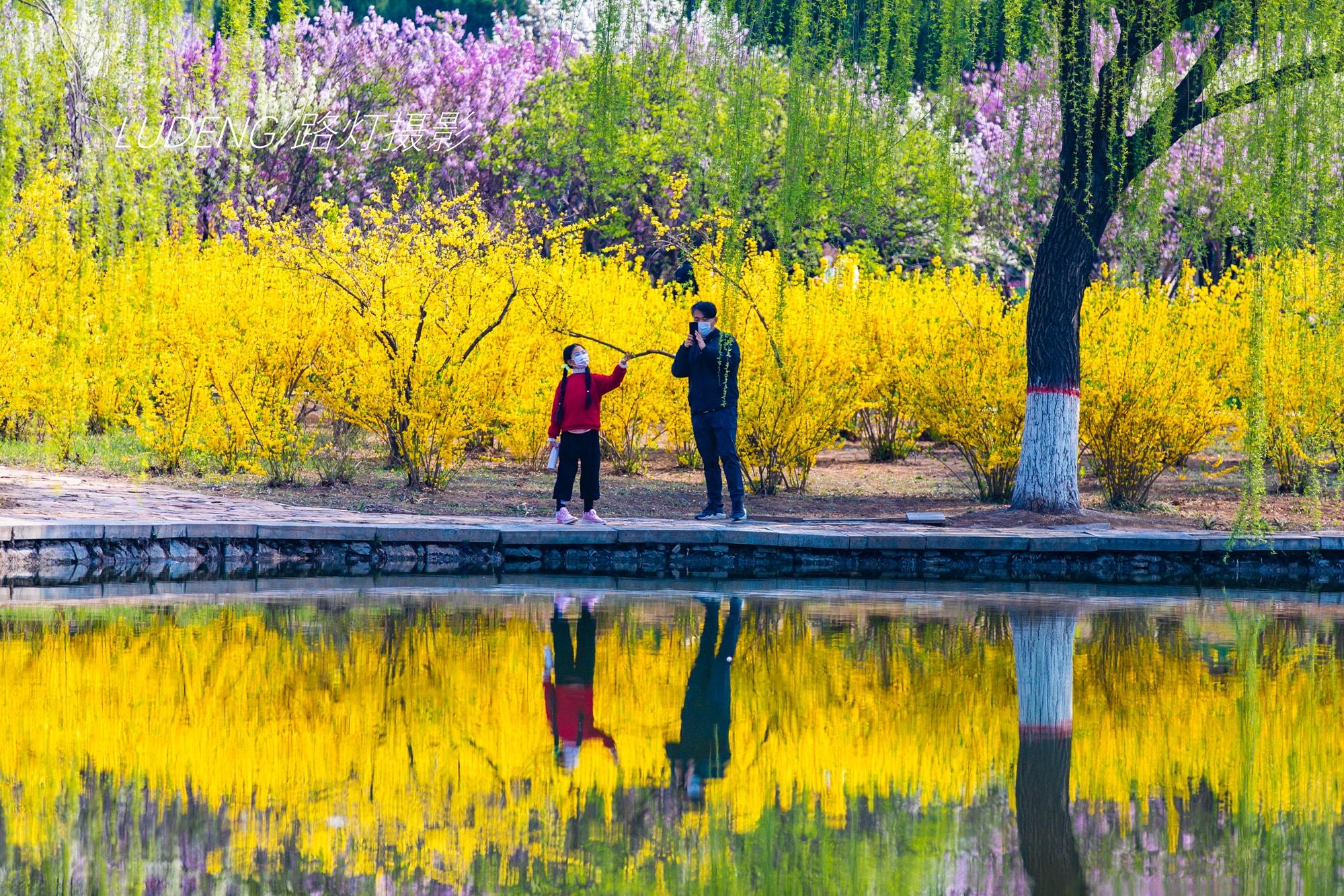 """春游河北,不可错过的5处踏青赏花地,每一眼都""""如诗如画"""""""