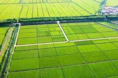 2021年土地改革,3个标准要清楚,2类农民会失去土地