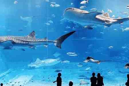 太原将开建海洋公园 建设工期3年