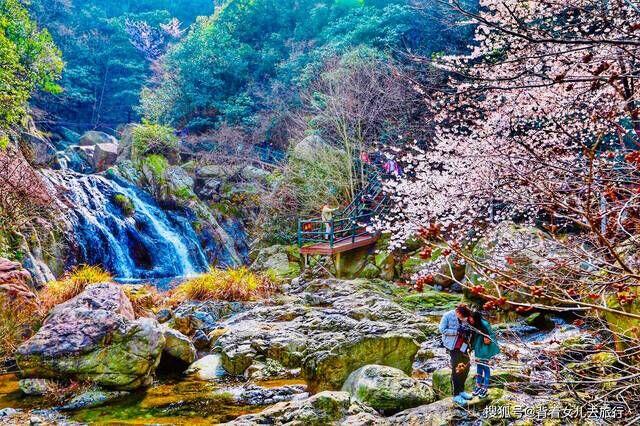 开了!大别山脉最美鲜花溪谷,3月开园等你来